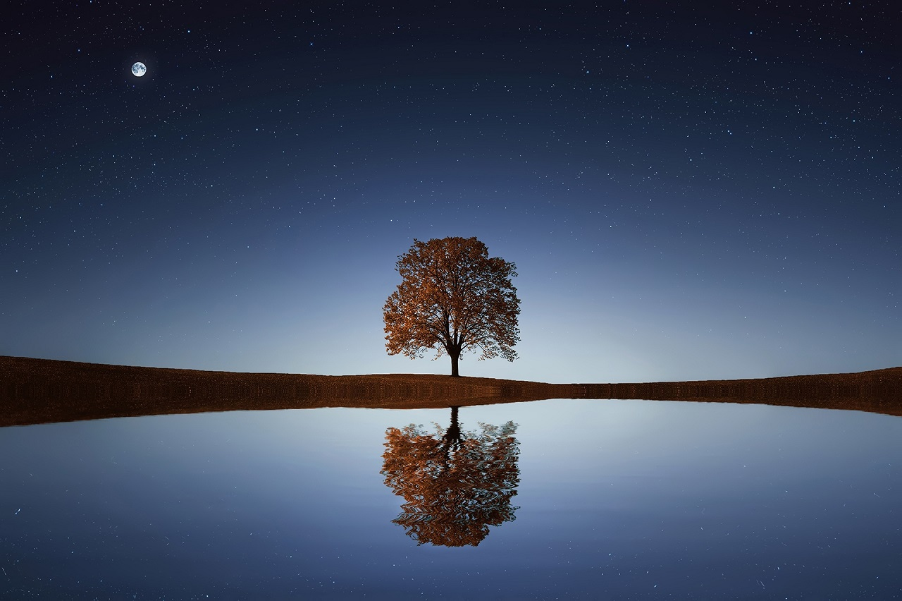arbre-seul-nuit-reflet-eau2